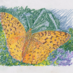 drawing of Aphrodite fritillary