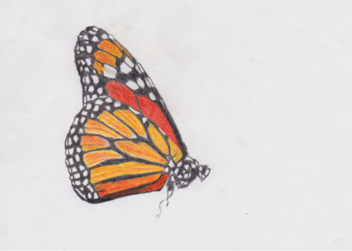 drawing of Monarch