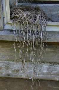birdnest on windowsill