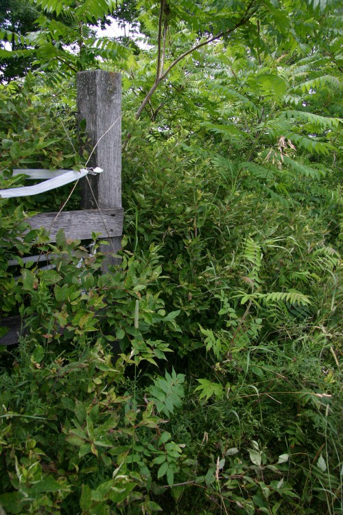 corner post with weeds