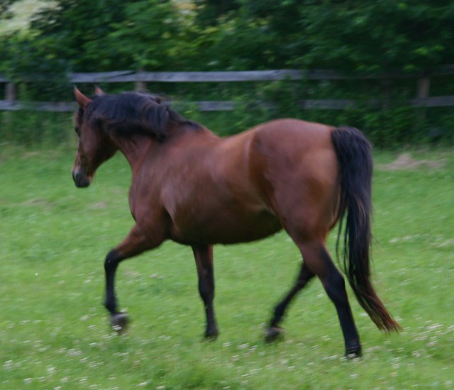 My mare Oakley.
