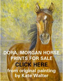 Dora, Morgan mare