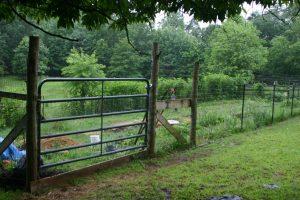 garden and garden gate